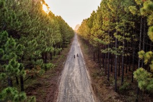 ellaspede-motorcycle-pine-forest